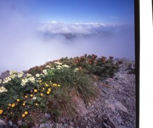 201307山頂に咲花073